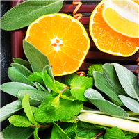 Sage & Citrus* Fragrance Oil 445