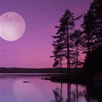 Moonlight Path* Fragrance Oil 316
