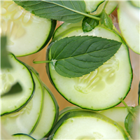 Cucumber Mint Fragrance Oil 312
