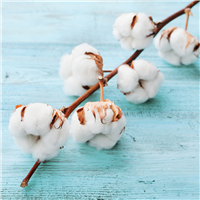 2134-Clean-Cotton-Fragrance-Oil-335