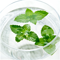 Water Soluble - Mint Fragrance Oil 1163