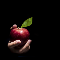 Enchanted Apple* Fragrance Oil 373