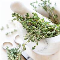 Lemongrass Mint - EO & FO Blend 379