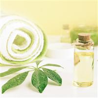 Spa Tonic Fragrance Oil 384