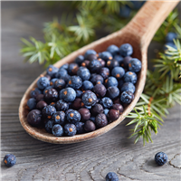 Juniper Berries EO- Certified 100% Pure  1052