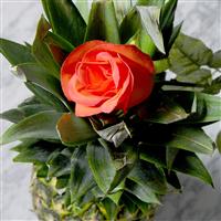 Lolita Lempicka* Fragrance Oil (Special Order)