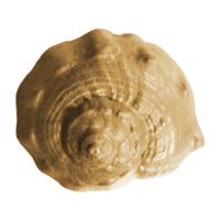Conch Soap Mold (MW 20)