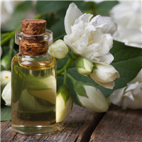 Jasmine Vanilla* Fragrance Oil 504