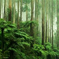 Rainforest* - EO & FO Blend 592