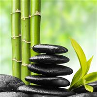 Bamboo Fragrance Oil 253