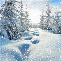 White Christmas* Fragrance Oil 569