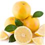 Grapefruit (White) EO - Certified 100% Pure 706