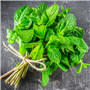 Peppermint (Natural) EO - Certified 100% Pure 712