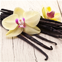 Fresh Vanilla* Fragrance Oil 263