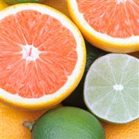 Bergamot Grapefruit -  EO & FO Blend 736
