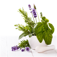 Lavender & Basil Fragrance Oil 629