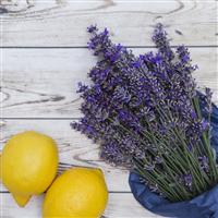 Lemon Lavender* Fragrance Oil 176