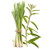 Lemongrass Verbena* - EO & FO Blend 357