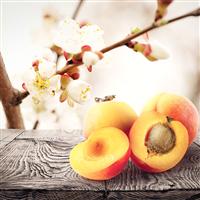 Apricot Freesia Fragrance Oil 155