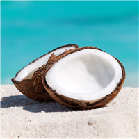 Caribbean Coconut Fragrance Oil 108