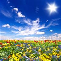Flowering Meadows* FO (Special Order)