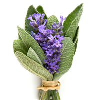 Lavender Sage* Fragrance Oil 622