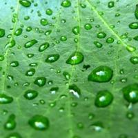 Natures Rain Fragrance Oil (Special Order)