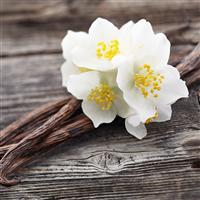 Vanilla Oak* - EO & FO Blend 625