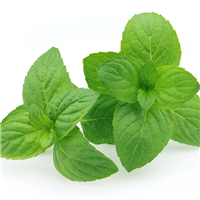 Peppermint (Redist) EO - Certified 100% Pure 699