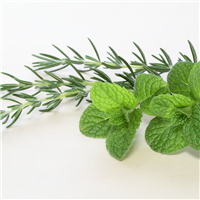 Revitalizing Rosemary Mint FO 209