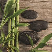 Bamboo Teak Fragrance Oil 283