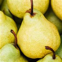 Sweet Juicy Pear Fragrance Oil 231