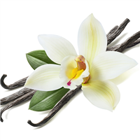 Vanilla Bean Fragrance Oil 240
