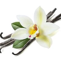 Vanilla Bean Fragrance Oil 240