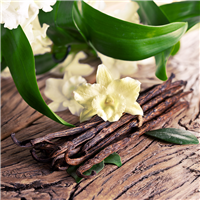 Sandalwood Vanilla Fragrance Oil 214