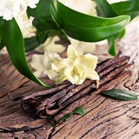 Sandalwood Vanilla - EO & FO Blend 214