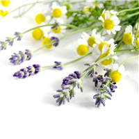 Chamomile & Lavender - Natural Fragrance Oil 1166
