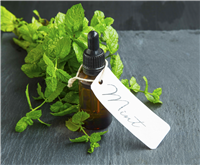 Purely Peppermint Fragrance Oil 278