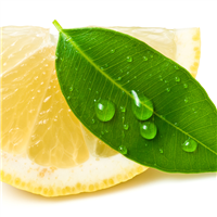 Lemon Eucalyptus EO - Certified 100% Pure 598