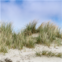 Dune Grass* Fragrance Oil 146