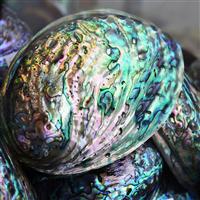 Abalone & Sea Fragrance Oil 314
