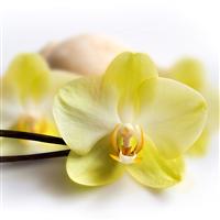 Vanilla Blossom Fragrance Oil 480