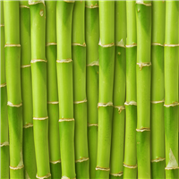 Fresh Bamboo* Fragrance Oil 349