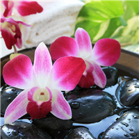 Water Orchid Fragrance Oil 338