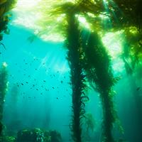 Sea Kelp & Agave Fragrance Oil 336