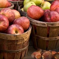 Apples & Acorns Fragrance Oil (Special Order)