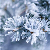 Alpine Frost Fragrance Oil 752