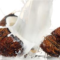 Coconut Milk Fragrance Oil 821