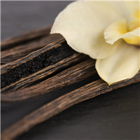 Vanilla Musk Fragrance Oil 773