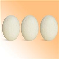 Clarifying Shampoo Bars Kit